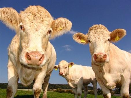 P.U.A. – PIANO DI UTILIZZAZIONE AGRONOMICA: per aziende agricole con allevamenti e altri materiali contenenti azoto.
