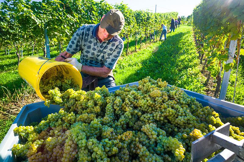 Imprese agrituristiche e vitivinicole: esonero contributivo INPSscadenza 20 novembre