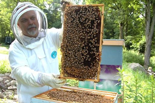APICOLTURA: Reg. UE 1308/2013 – Art. 55 – Aiuto all'apicoltura