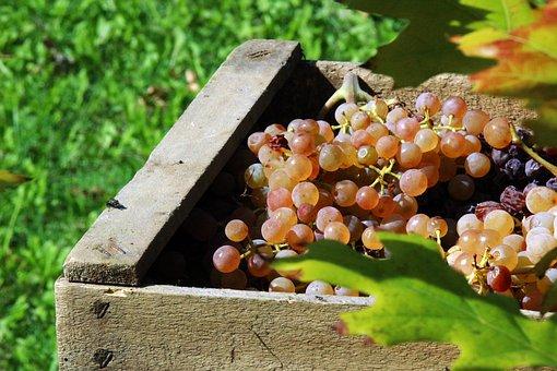 Campagna vitivinicola 2019-2020                      Vademecum vendemmiale