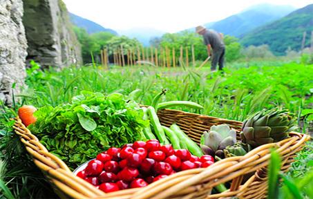 Cooperativa agricola mista, a ogni attività la propria tassazione
