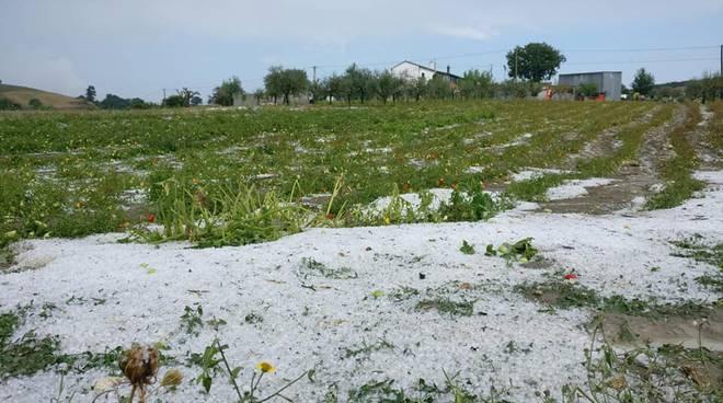 EVENTI CALAMITOSI: Perdite per mancata coltivazione e per eventi naturali