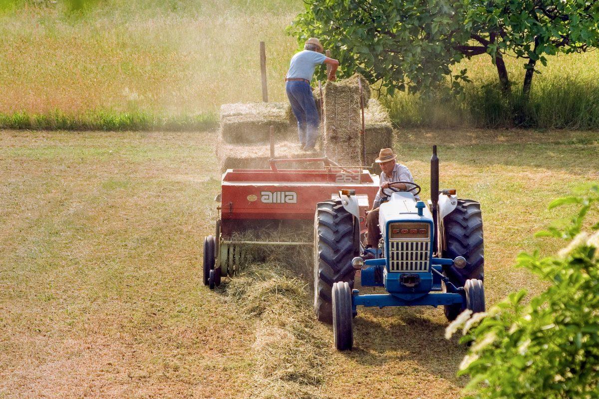 OPERAI AGRICOLI A TEMPO DETERMINATO E INDETERMINATO